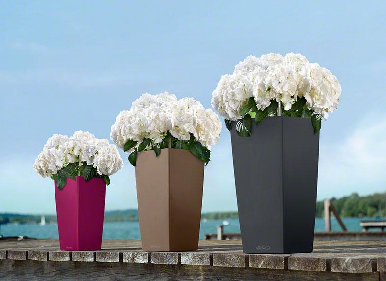 Lechuza květináče řady color